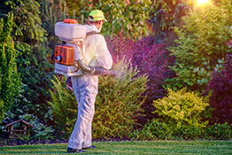 Picture of man dressed in protective gear with back pack sprayer applying pesticide to landscaped garden.